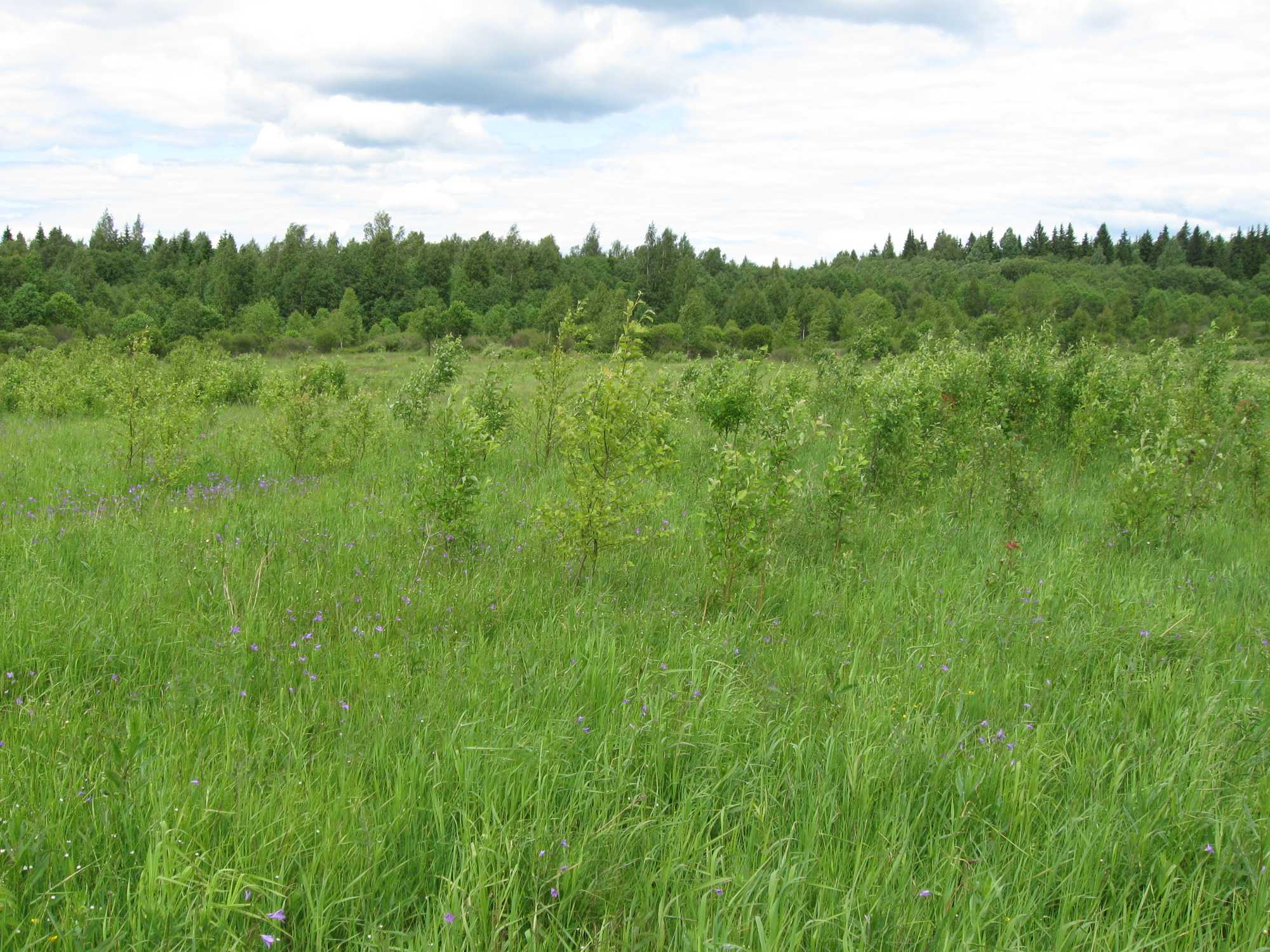 Земельный участок: 77,7 Га, Лихославльский район