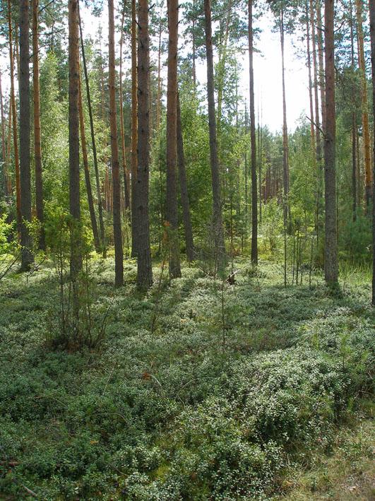 Земельный участок: 27 соток, Калининский район
