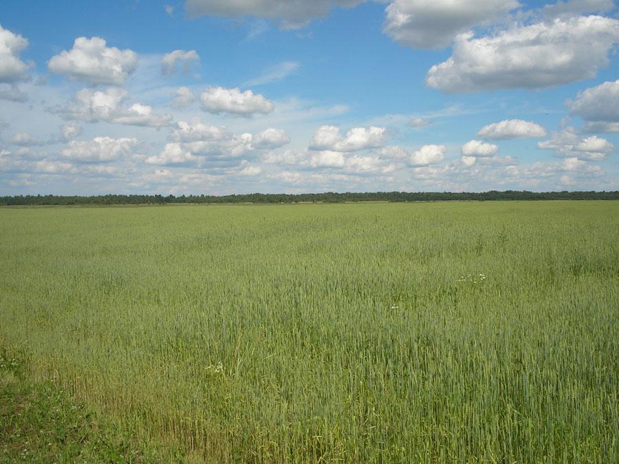 Земельный участок: 172,88 Га, Сонковский район