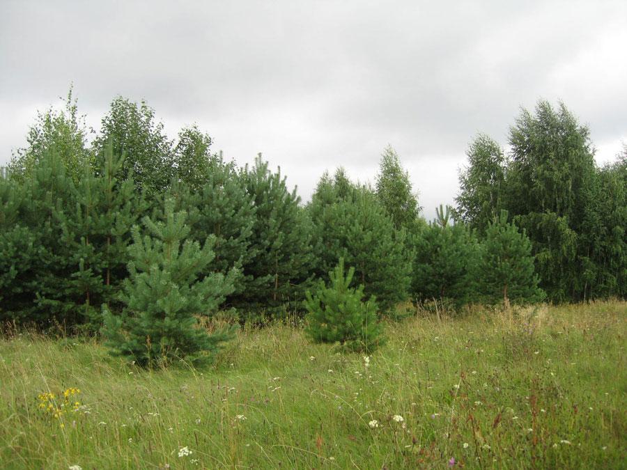 Земельный участок: 50 соток, Конаковский район