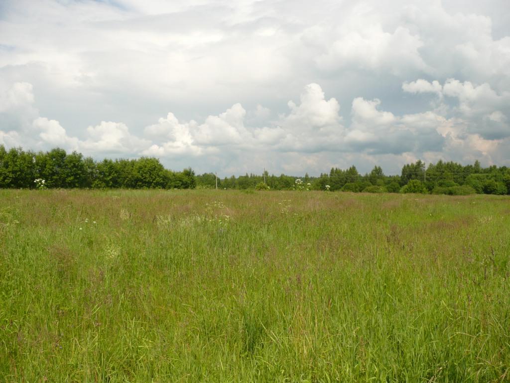 Земельный участок: 50 Га, Рамешковский район