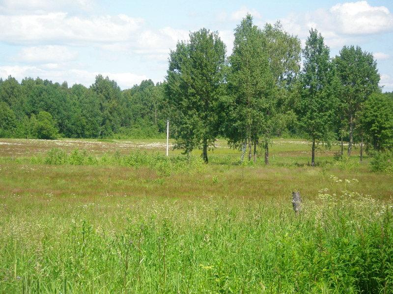 Земельный участок: 1,5 Га, Зубцовский район
