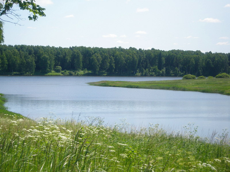 Земельный участок: 50 соток, Зубцовский район