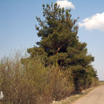 Земельный участок: 9,08 Га, Калязинский район